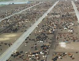 Feedlot.jpeg